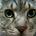 redtailcat