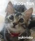 yukirinkoさんの画像