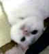 miumiuさんの画像