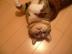 chojubaiさんの画像