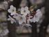 cerisierさんの画像