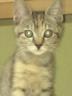 仔猫さんの画像