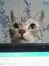 ラム猫さんの画像