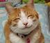 tomozouさんの画像
