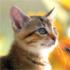 ソノ日暮さんの画像