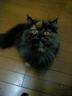 yukkoさんの画像