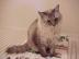 女王猫さんの画像