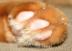 maicheeさんの画像
