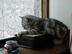 tobi_inuさんの画像