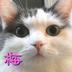 koumeさんの画像