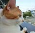 kokonosukeさんの画像