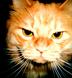 キキさんの画像