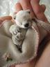 Saeri-bearさんの画像