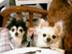 mamikoさんの画像