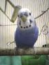 鳥谷さんの画像