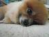piyokoさんの画像