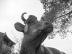 長草の牛さんの画像