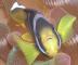 yamakiさんの画像