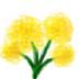 菜の花さんの画像