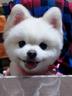 kinayumaさんの画像