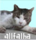 アルファルハさんの画像