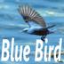 bluebirdさんの画像