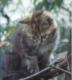 shikiさんの画像