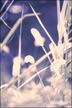suzu*さんの画像