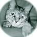 うささんの画像