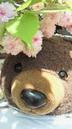 くんちゃんさんの画像