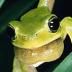 frogさんの画像