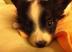 30代育児中ママ@yuyuyu_149さんの画像