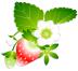 うさぎ苺さんの画像
