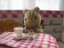 korisu-cafeさんの画像