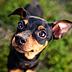 愛犬ご飯さんの画像