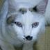 OriFoxさんの画像