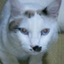 OriCatさんの画像