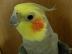 Chihoさんの画像