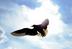 飛んで翔るさんの画像