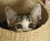 maomao_pongさんの画像