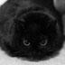 ジャマーさんの画像