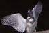 kingfisherさんの画像