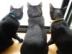 黒猫3匹*さんの画像