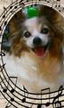 maeashi・恵さんの画像