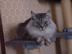 猫の友 メルティーさんの画像
