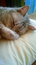 花猫さんの画像