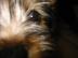 Vino飼い主さんの画像
