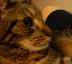 MinMinさんの画像