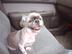 座敷犬さんの画像