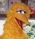 Big_Birdさんの画像